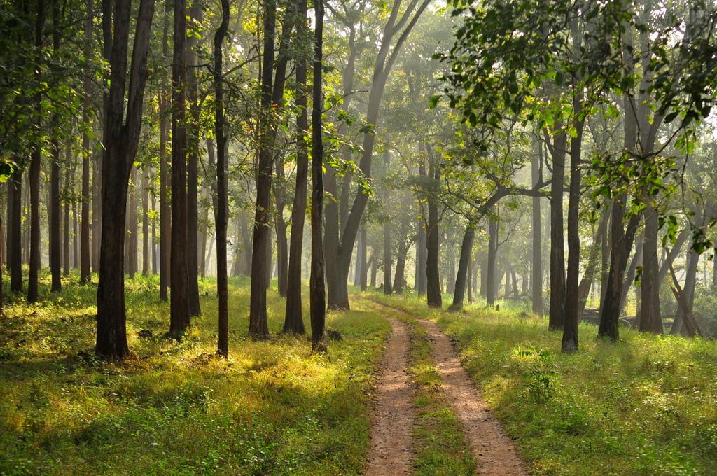 Nagarhole National Park (Photo by sarit2006)