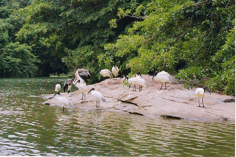 Ranganathittu Bird Sanctuary (Photo by MGA73bot2)