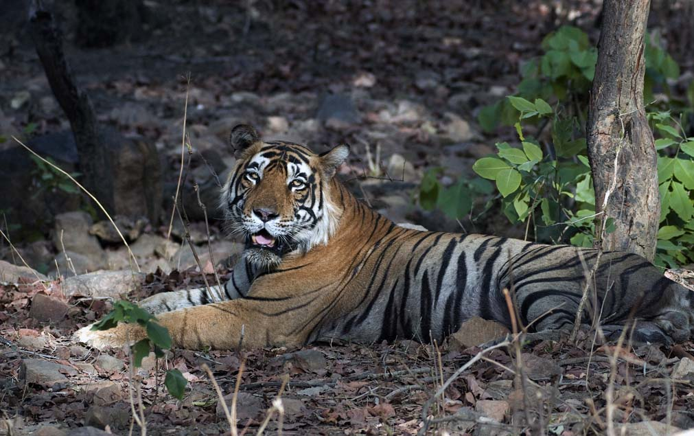 Ranthambore_Tiger_Reserve_(3619932614)
