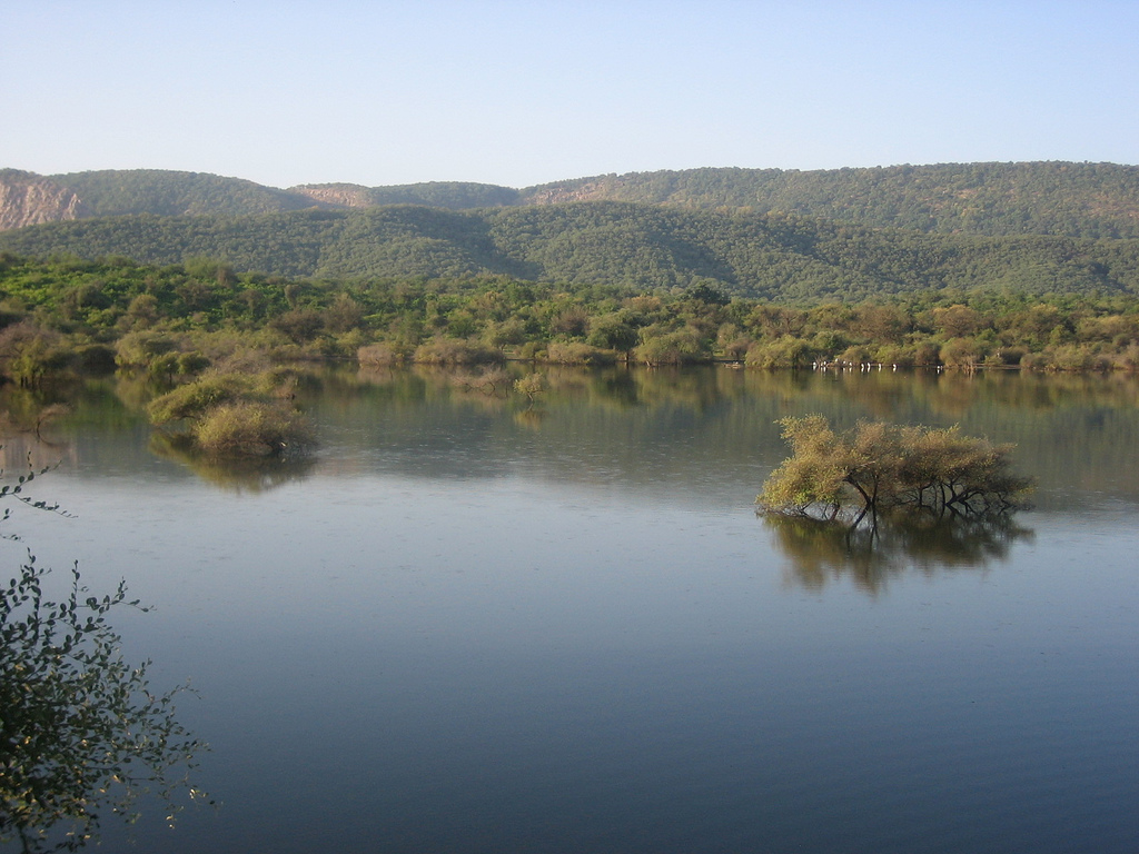 Water_body_within_the_Sariska_Reserve,_Rajasthan1