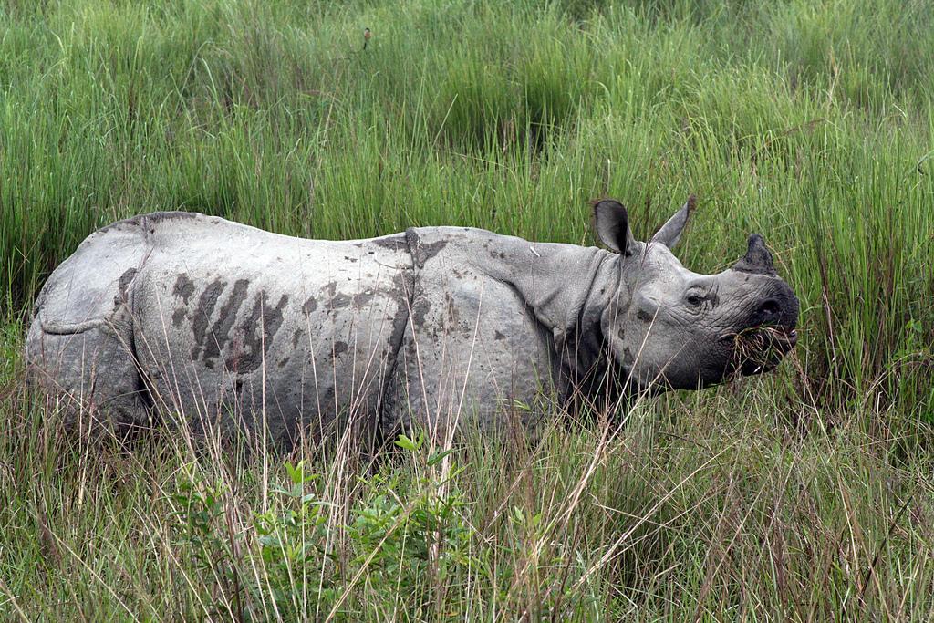 One-Horned Rhino (Photo by Diganta Talukdar)
