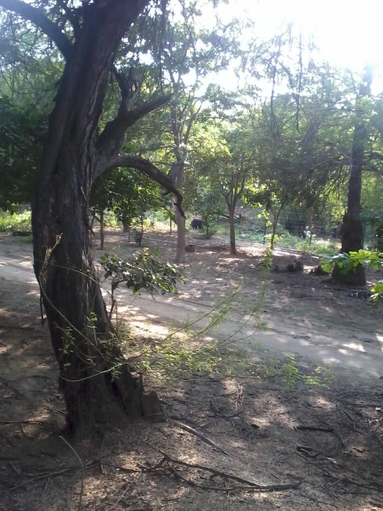 Sur Sarrovar Bird Sanctuary Agra