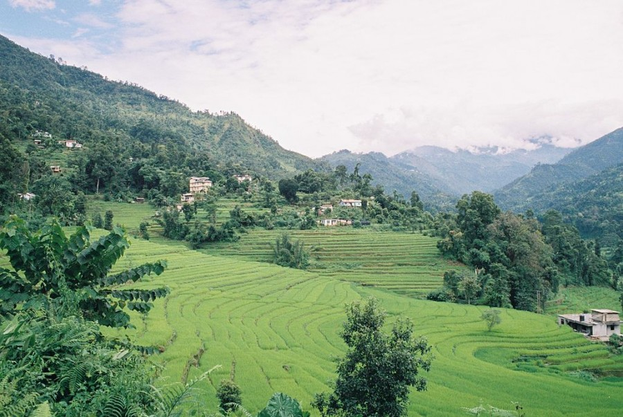 Terraced_rice_fields_of_Sikkim_India