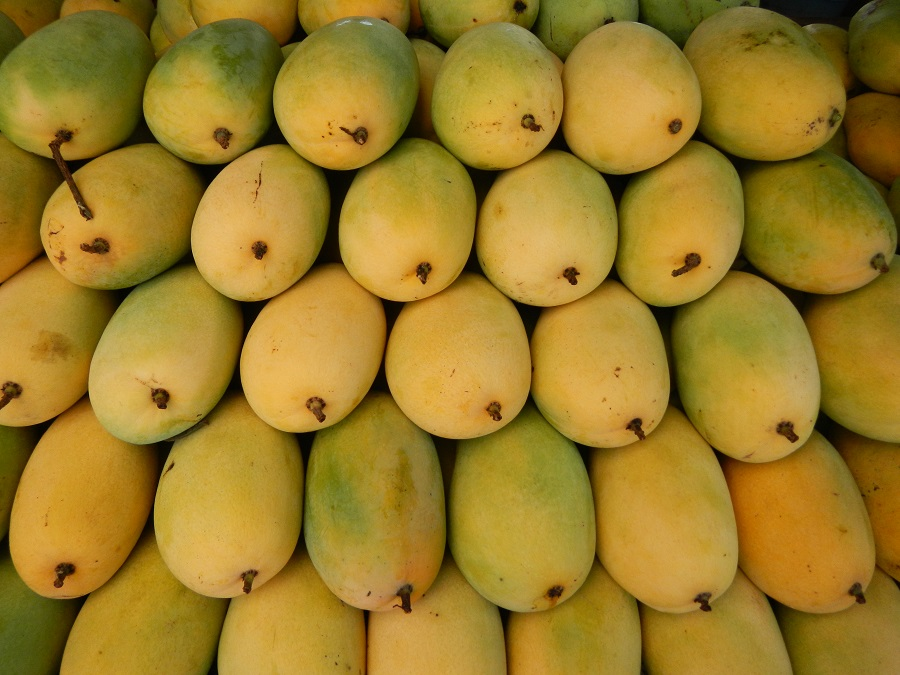 Final Mangoes
