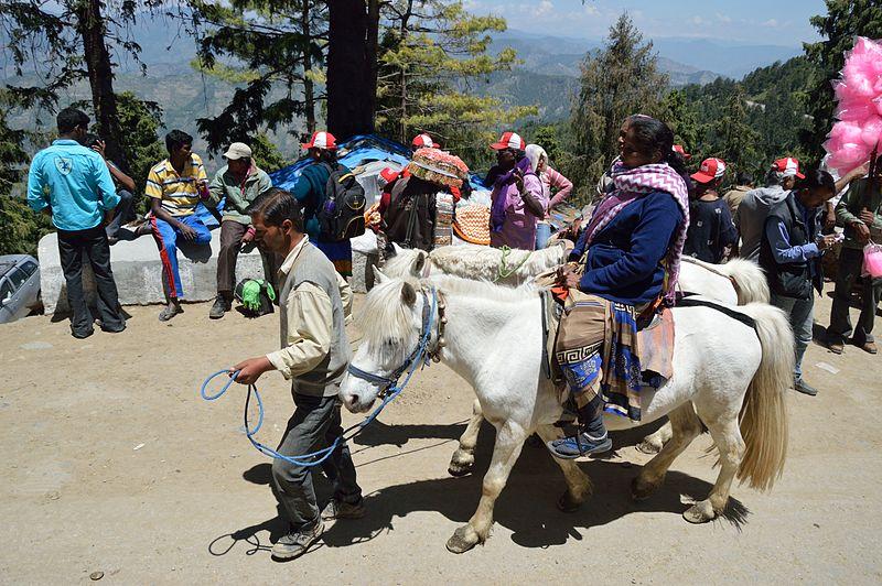 Tourist_on_Horse_-_Kufri_2014-05-08_1716