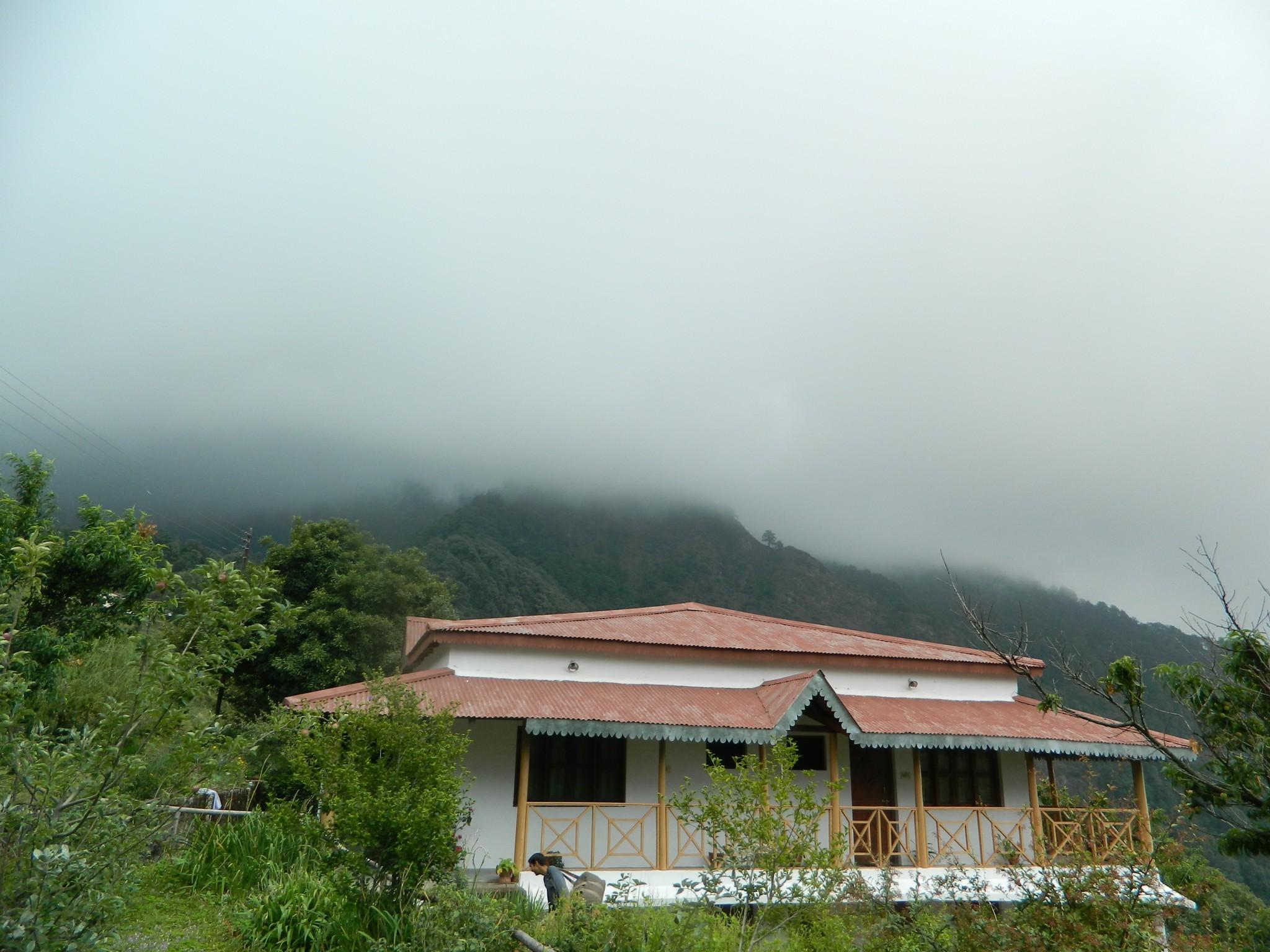 Kafal_house,_pangot,_DSCN5563