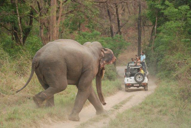 Asian_Elephant_at_Corbett_National_Park_10.jpg