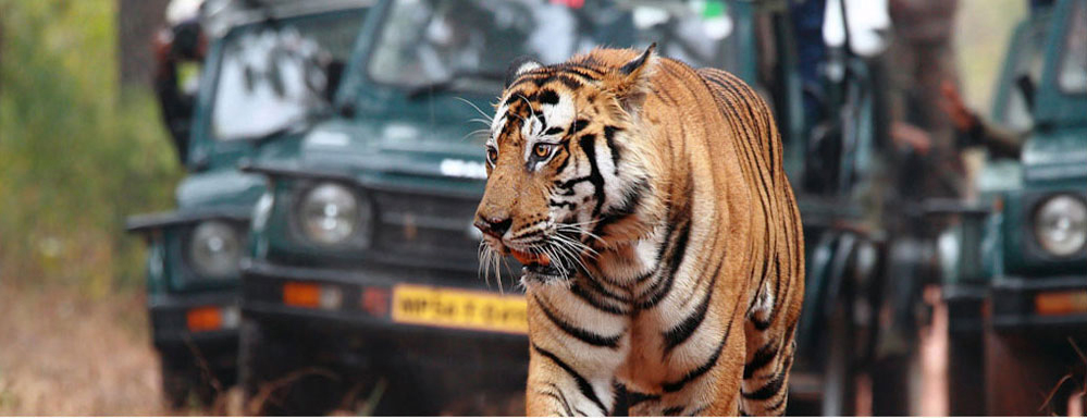 bandhavgarh-national-park-b3