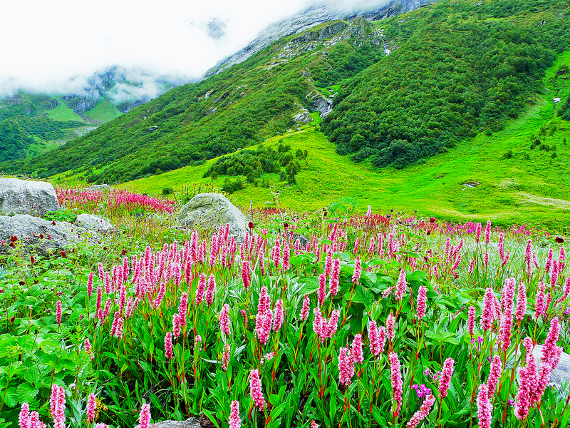 Valley of Flowers (Photo by Pranab Das)