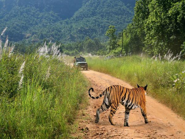 bandhavgarh-national-park_25
