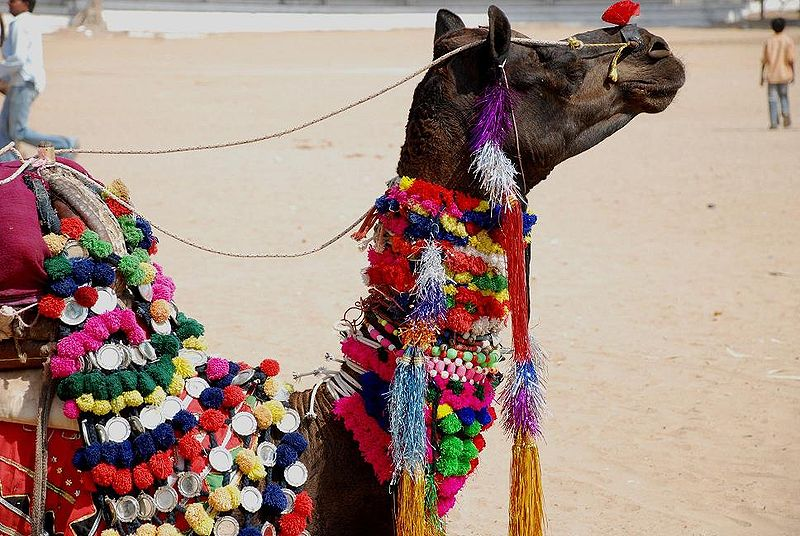 800px-A_decorated_camel_at_Pushkar_Camel_Fair