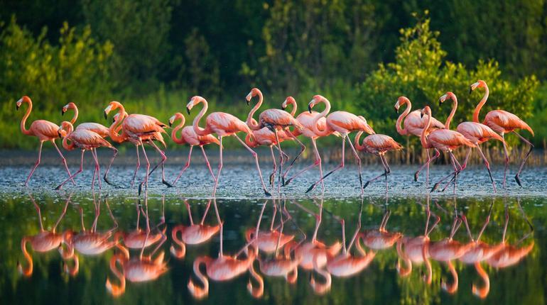 flamingo stpry
