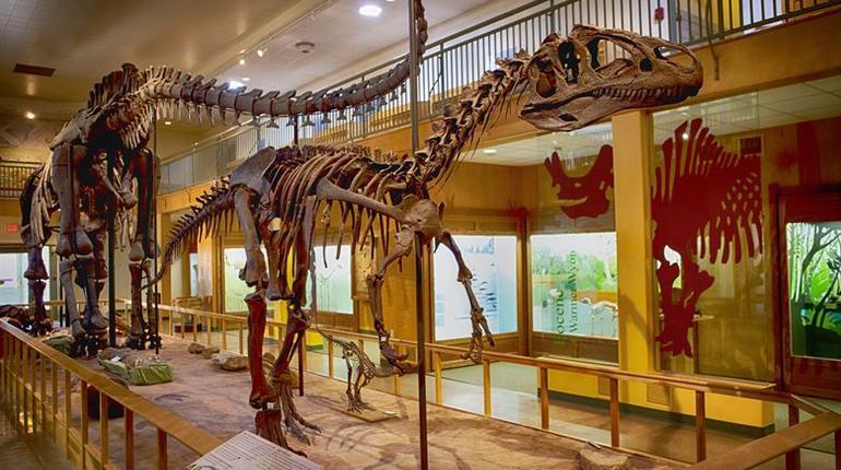 dinosaur museum final
