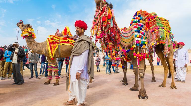 Camel perform