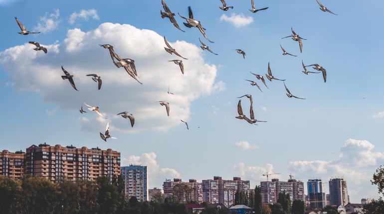 a flock of birds flies over the little city