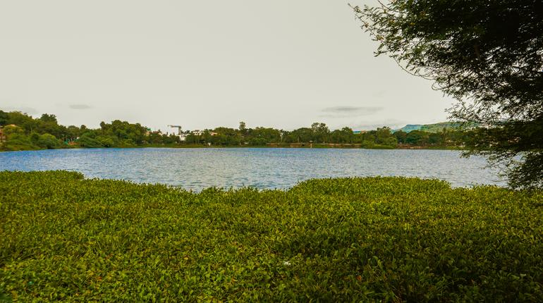 Serene Water Lake With Lush Greenery Light Blue Sky and Tree