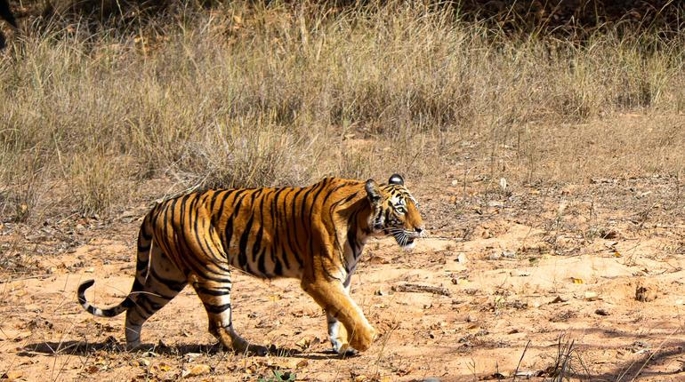 wild life in different national parks of india