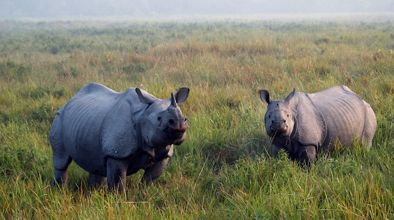 Indian one-horned rhinos can be found in Dudhwa