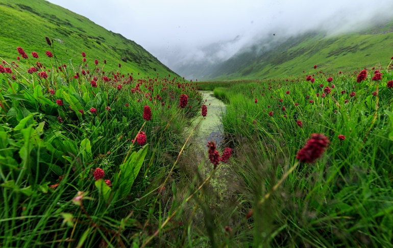 valley with flowers india