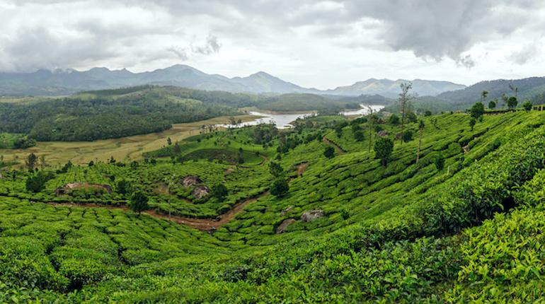 Panoramic view in Munnar, Kerala, India